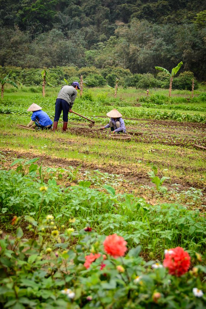 20130401 Halong Bay Vietnam_D600_ND6_6415